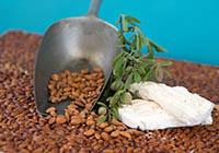 Crème de Nougat